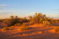 Red desert with bush in sunset light Royalty Free Stock Photo