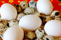Red dish with hen and quail eggs image of Stock Photos
