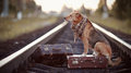 The red dog sits on a suitcase on rails with suitcases looks for house waits for owner lost mongrel road Stock Images