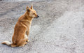 Red dog a sitting on the road Stock Photo