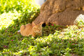 Red domestic cat lying in a meadow sunny day Royalty Free Stock Images