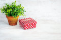Red dotted gift box and a green flower in a rustic ceramic pot. White wooden background, copy space.