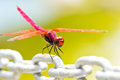 A red dragonfly resting on chain Royalty Free Stock Photo