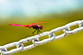 A red dragonfly resting on chain Stock Photos