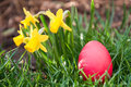 Red easter egg hidden grass Royalty Free Stock Photos