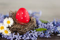 Red easter egg in a nest among spring flowers Royalty Free Stock Photos