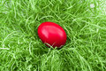 Red egg in green grass Royalty Free Stock Images