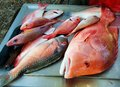 Red Emperor Fish and Parrot Fish Australia Royalty Free Stock Photo