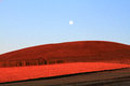 Red farm in inner mongolia of china Stock Images