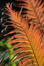 Red fern leaves Royalty Free Stock Photo