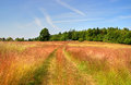 Red field path to cottage Stock Photography