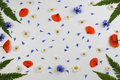 Red field poppies, daisies, cornflowers and green leaves frame on white background. Royalty Free Stock Photo