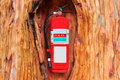 Red fire extinguisher in the tree Royalty Free Stock Photo