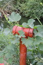 Red fire hydrant cover by weed a Royalty Free Stock Photos