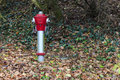 Red fire hydrant a in the forest Stock Image