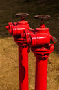 Red fire hydrant on green Stock Image