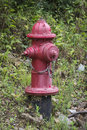 Red fire hydrant next to norris lake wood line Stock Image