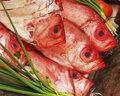 Red Fish exposed for sale Stock Image