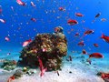 Fish in Red sea coral reef Royalty Free Stock Photo