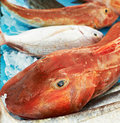 Red fish for sale Royalty Free Stock Photos