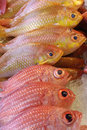 Red fishes o Stock Photos