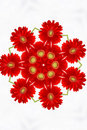 Red floral kaleidoscope Stock Photography