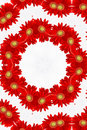 Red floral kaleidoscope Royalty Free Stock Photos