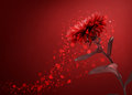 Red flower background Royalty Free Stock Photo