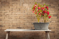 Red flower and brick wall background Royalty Free Stock Photo