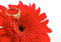 Red flower with a golden ring on top Stock Photos