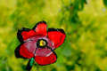 Red Flower On Green Background