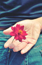 Red flower hidden behind a picture vintage mood in bangkok thailand Royalty Free Stock Images
