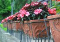 Red flower pots weigh on the wall Royalty Free Stock Photo