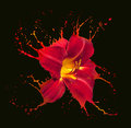 Red flower splashes bright with on black background Stock Image