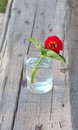Red flower in the tumbler with water on wood old board Stock Photos