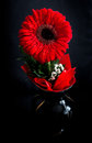 Red flower in a vase Royalty Free Stock Photo