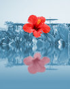 Red flower on water, beach resort Stock Photography