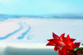 Red flower and winter landscape beautiful indoor on windowsill in contrast of cold blurred behind the glass outside with a car Stock Photo