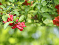 Red flowers with green leaves outdoors on blurred background in sunny spring day Stock Photos