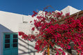 Red flowers on medieval white house, island of Mykonos, Greece Royalty Free Stock Photo