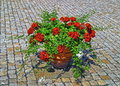 Red flowers pot on the stone pavement
