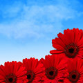 Red flowers and summer sky Royalty Free Stock Images