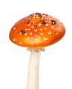 Red fly agaric mushroom with pieces of dirt isolated on white background Stock Photography