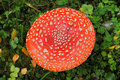 Red Fly mushroom Royalty Free Stock Photo