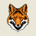 Red fox head Royalty Free Stock Photo