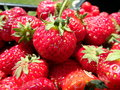 Red garden strawberries, Royalty Free Stock Photo