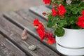 Red Geranium Royalty Free Stock Photo