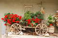 Red geraniums on antique wooden cart a display of flowers in a small northern italian village an old animal and barrel and pink Royalty Free Stock Photos