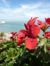 Red geraniums on a balcony with sea and sky as background Royalty Free Stock Images