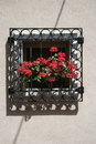 Red geraniums on window sill.